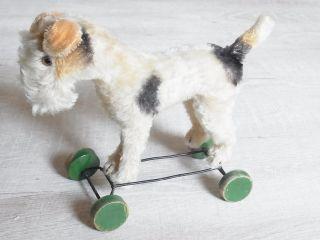Alter Steiff Hund Auf Rädern Terrier Foxy Auf Rollen Bild