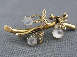 Schöne Alte Brosche Ca.  Um 1860/80 Biedermeier Mondstein Perlen Bild