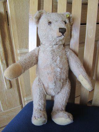Alter Steiff Teddybär Teddy 50er Jahre Bild
