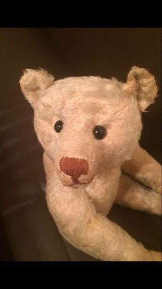 Steiff Teddybär Bild