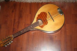 Laute Mandoline Ddr Musikinstrumenten Genossenschaft Markneukirchen Bild