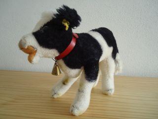 Steiff Kuh Schwarz - Weiß Gefleckt Rotes Halsband,  Glocke 70erjahre 28cm Bild