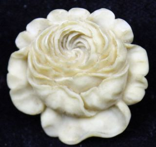 Sehr Fein Geschnitzter Knopf In Form Einer Chrysantheme Vermutlich Asien Um 1900 Bild