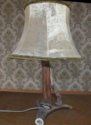 Tischlampe Mit Hirschgeweih Bild