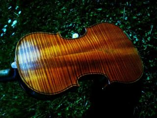 Schöne 4/4 Geige M.  Zettel