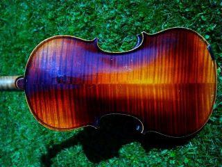 Schöne Violine M.  Zettel