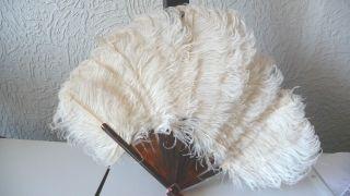 Antiker Fächer,  Absolut Rar Straußenfedern Weiß Und Echtem Schildpatt,  Perfekt Bild
