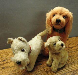 Konvolut Steiff Hunde,  Mops Mopsi,  Seltener Terrier (knopf),  Cockerspaniel Susi Bild