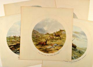 Balfour Browne 6 Signierte Originale Im Rund 1912 Jagd Wild Dammwild Hirsche Bild