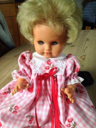Schildkröt Puppe Bild