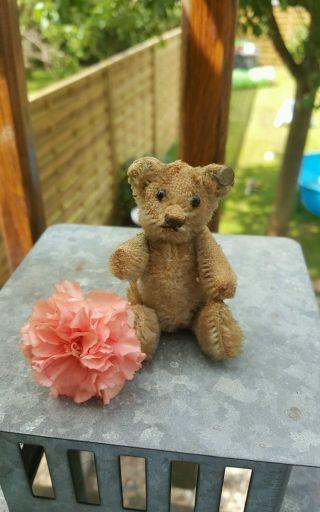 Alter Steiff Teddy Bär Rarität Selten Sammlerstück Bild