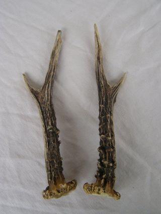 Geweihstangen - Paar Rehbock.  19cm.  105gramm.  Zum Basteln Oder Deko. Bild