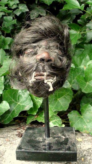 Schrumpfkopf Shrunken Head Tsantsa Bild