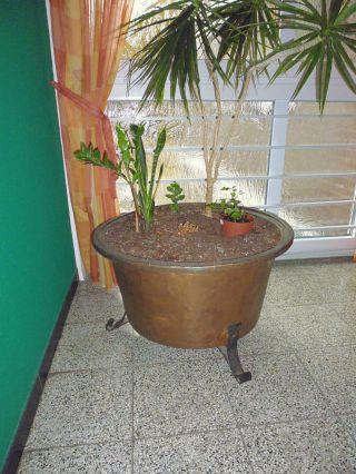 1 Alter Kupfer Waschkessel Als Blumenkübel Mit Fuß Zu Verwenden Bild