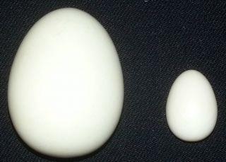 Antike Ostereier Beinarbeiten,  Bein Ca.  50 Gramm Zusammen,  Tolle Maserung Bild