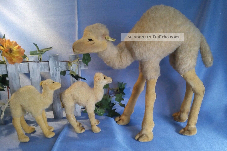 Großes Kamel Von Steiff,  B,  32 Cm / Steiff Camel,  32 Cm Steiff Bild