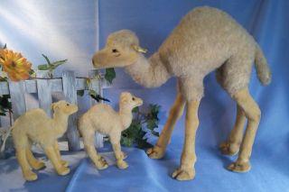 Großes Kamel Von Steiff,  B,  32 Cm / Steiff Camel,  32 Cm Bild