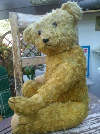 Alter Teddy Sucht Anschluss. Bild