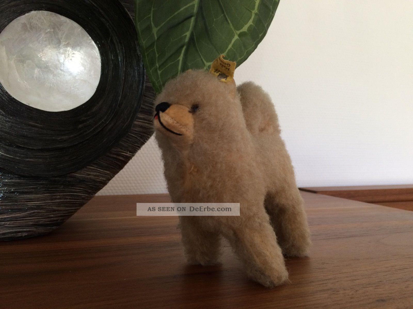 Steiff Hund Dog Chow Chow,  Knopf,  Fahne 1512,  00,  12 Cm Selten Tiere Bild