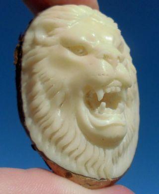 Löwe,  Löwen - Kopf,  Geschnitzt Aus Tagua - Nuss Bild