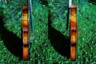Alte Schöne 4/4 Geige