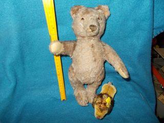Antikspielzeug - Steiff - Alter Bär Und Löwe,  Steifftiere,  1950er,  Old Baer,  Teddys Bild