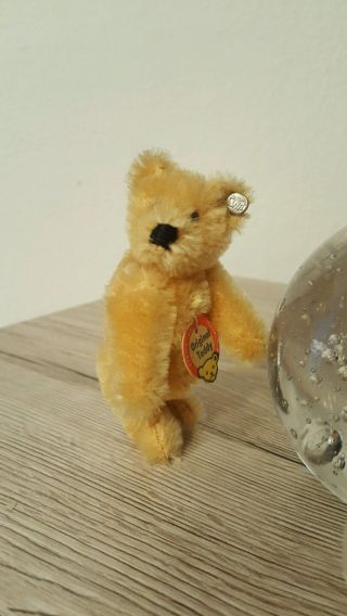 Alter Kleiner Steiff Teddy Bär Blond Knopf Und Schild Rarität Bild