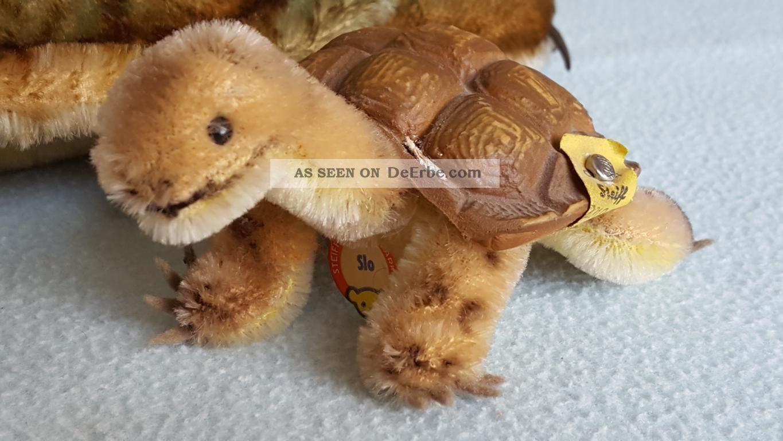 Steiff Mohair Slo Schildkröte,  Turtle 2310,  00 1959 - 67 Steiff Bild