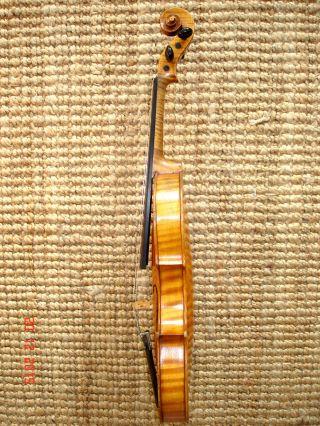 4/4 Violine Geige Carl Gottlob Schuster Jun.  Brandst.  Klang Sofort Spielb. Bild