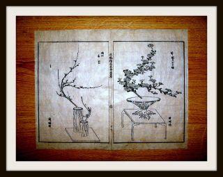 2 Japanische Holzschnitte,  Tokugawa - Schogunat,  Reis - Papier,  Ikebana - Kunst,  Um1600 Bild