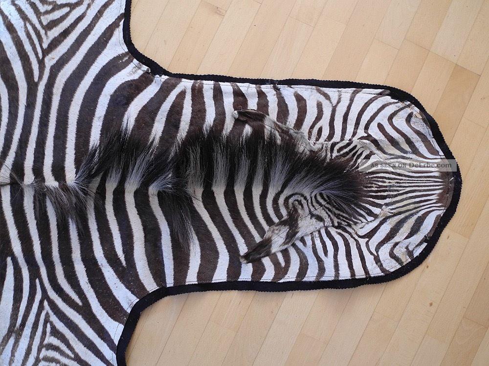 Echtes Zebrafell Aus Afrika - Exotisches Schmuckstück - Wohnkultur 160x250cm Jagd & Fischen Bild