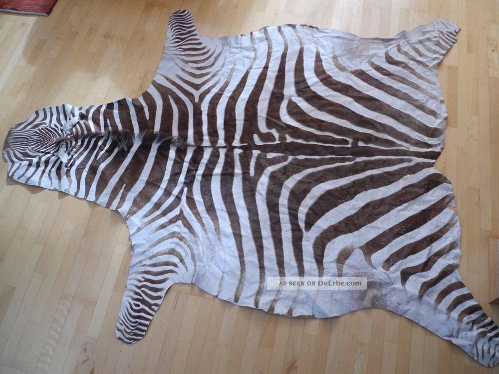 Echtes Chapman - Zebrafell - Exotisches Schmuckstück - Wohnkultur 200x250cm Jagd & Fischen Bild