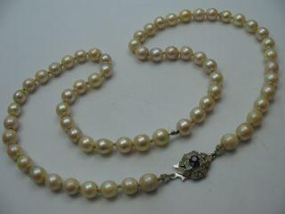 Schöne Echte Alte Salzwasser Perlenkette Mit Einer Schließe Aus 750 Weißgold Bild