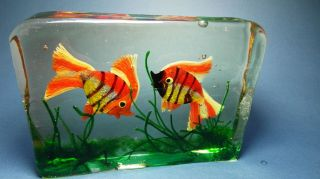 Big Murano Aquarium Fish Glas Glass Gino Cenedese Bild