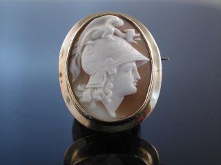 Antike Muschel Gemmen Brosche Kamee Gold England Um 1850 Perseus Cameo Brooch Bild
