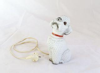 Alter Rauchverzehrer Bettelnder Pudel Hund In Weiß - Herrliche Rarität Bild