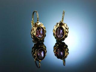 Um 1930 Charmante Ohrringe Gold 333 Amethyste Earrings Bild