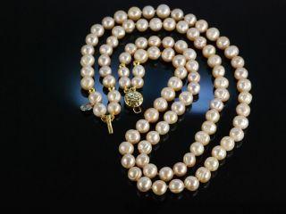 Zartes RosÉ Zucht Perlen Collier Kette Silber 925 Vergoldet Pearl Necklace Bild
