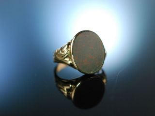 Antiker Siegel Wappen Familien Ring Gold 333 Heliotrop Um 1910 Antique Seal Ring Bild