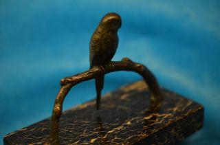 Altes Bronze Papagei Modell Auf Ast Sitzend Naturgetreu 1920/30 Bild