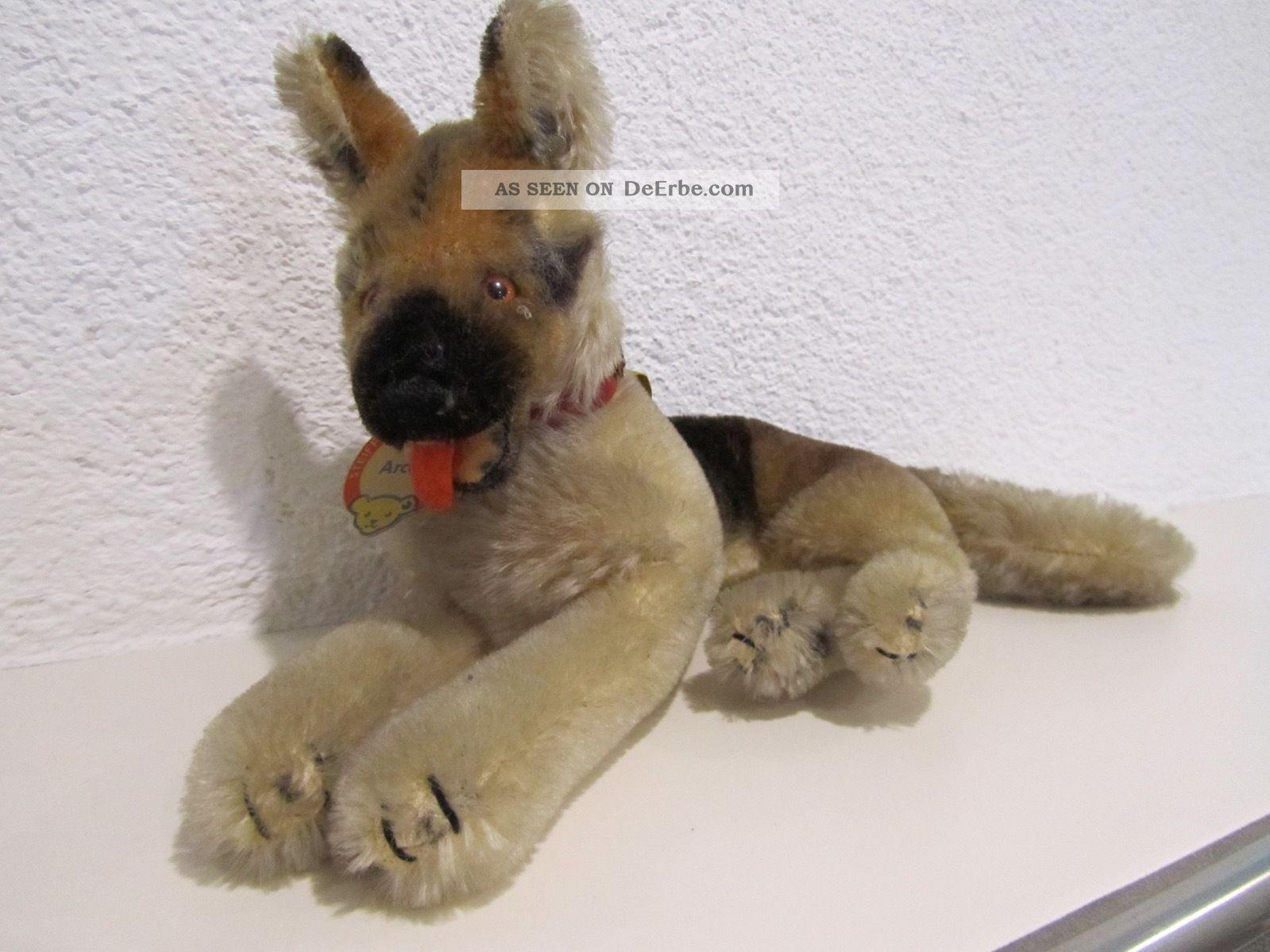 Steiff Schäferhund Arco Liegend 60er Jahre Knopf Im Ohr 2322,  00 Tiere Bild