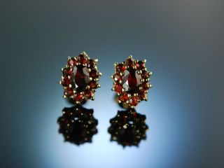 Klassische Granat Ohrstecker Ohrringe Gold 333 Um 1960 Tracht Garnet Earrings Bild