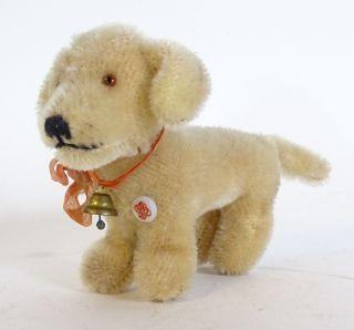 Seltener Antiker Mohair Petz Dackel Hund Hart Gestopft Mit Glöckchen Bild