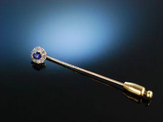 Edle Revers Krawatten Nadel Gold 585 14 Kt Saphir Diamanten Um 1900 Bild