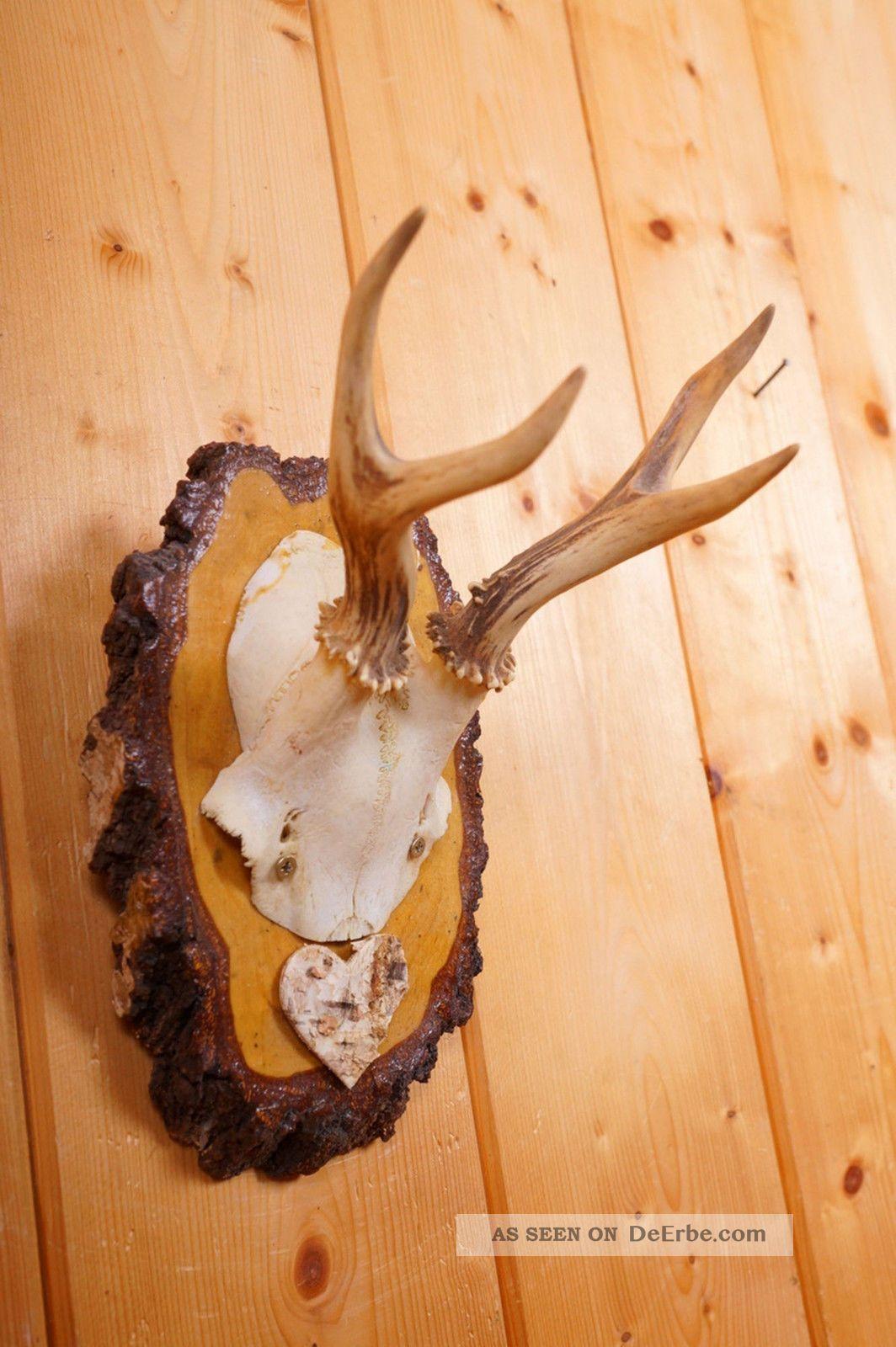 Geweih Deko Natur Rehgeweih Auf Troph Enbrett Roe Deer Trophy