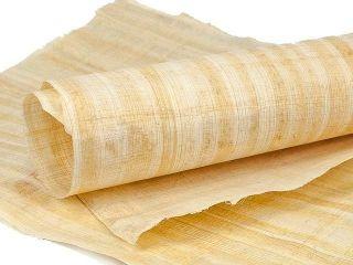 Cyperus Papyrus Blatt 62x42cm Naturbelassene Ränder Bild